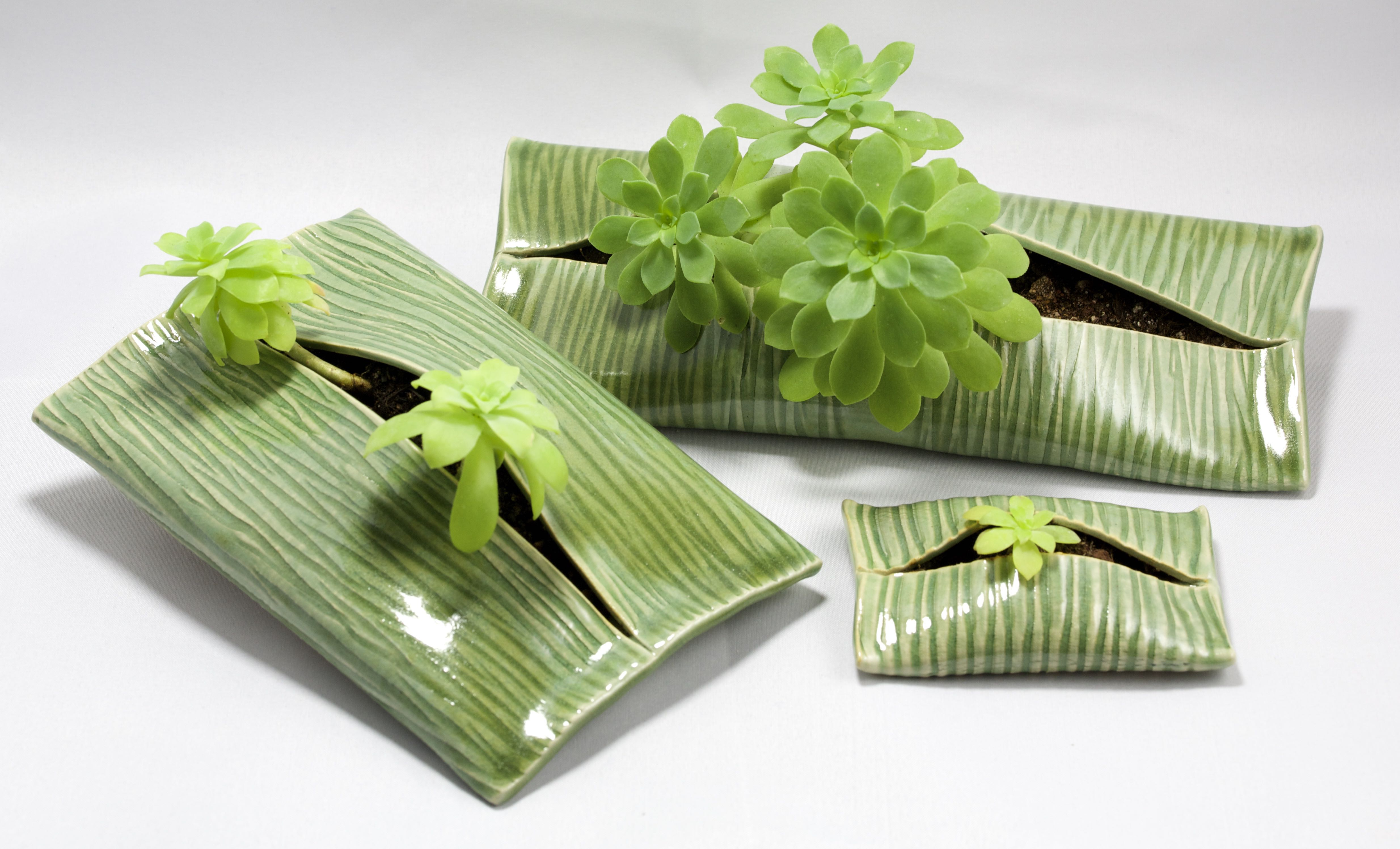 Plantes enveloppées